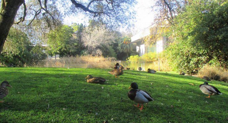 5 amazing public gardens in Lisbon