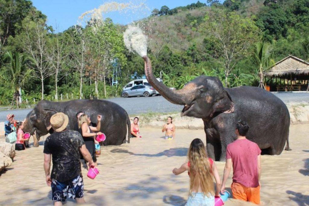 Santuário de Elefantes   O Que Fazer Em Phuket   Warmrental