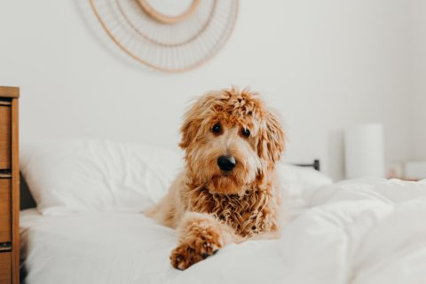 How To Make Your Vacation Rental Pet-Friendly